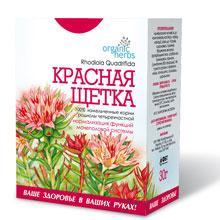 Трава красная щетка для лечения поликистоза