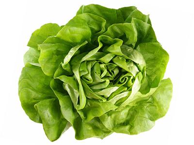 салат - латук